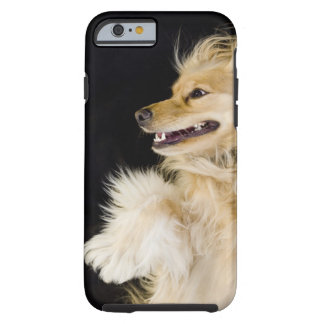 cocker spaniel mix on its back tough iPhone 6 case