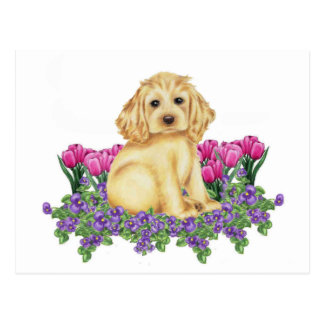 Cocker Spaniel Postcard