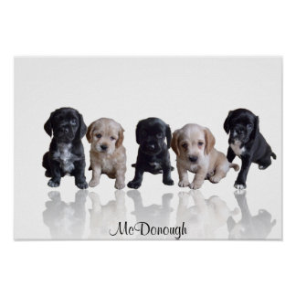 Cocker Spaniel Puppies Poster