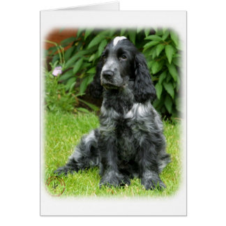 Cocker Spaniel puppy 9W017D-014 Card