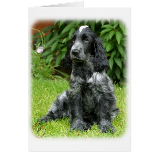Cocker Spaniel puppy 9W017D-014 Greeting Cards