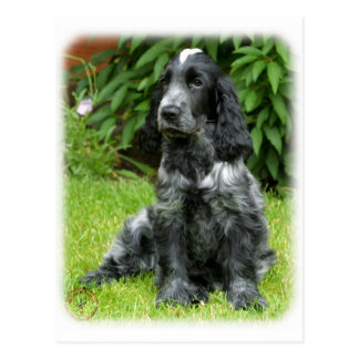 Cocker Spaniel puppy 9W017D-014 Post Cards