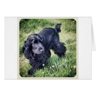 Cocker Spaniel Puppy Card
