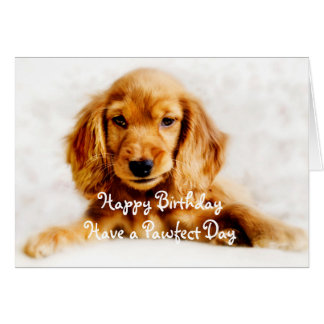 Cocker Spaniel Puppy Happy Birthday Greeting Card