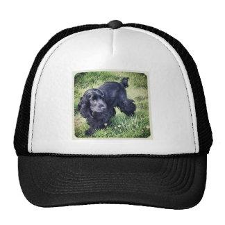 Cocker Spaniel Puppy Hat