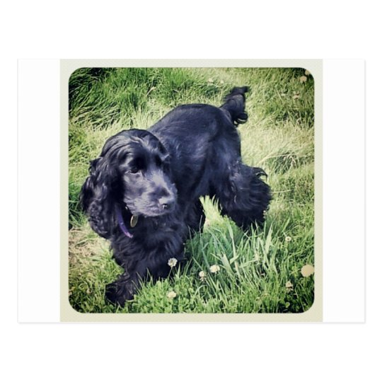 Cocker Spaniel Puppy Postcard