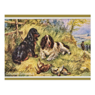 Cocker Spaniels Postcard
