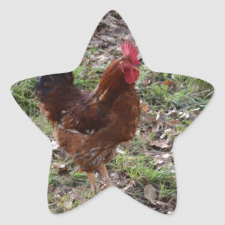 Cockerel Star Sticker