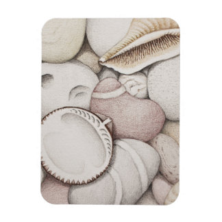 Cockle Shell & Pebbles in Pencil Photo Magnet
