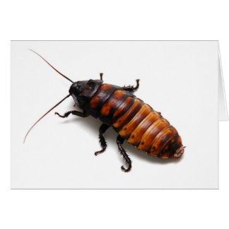 Cockroach Greeting Card
