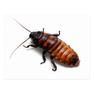 Cockroach Postcard