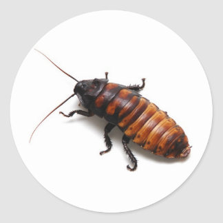 Cockroach Stickers