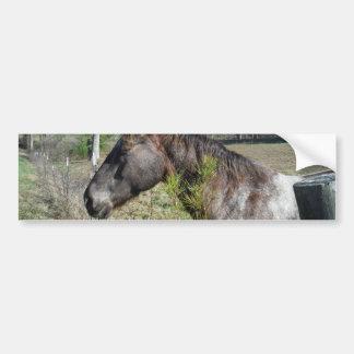 Coco and Cream Colored Horse Bumper Sticker