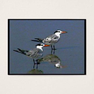 Cocoa Beach, FL 2 Birds2004~1  by jGibney  ATC ~OE Business Card