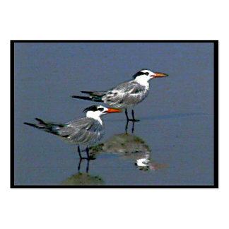 Cocoa Beach, FL 2 Birds2004~1  by jGibney  ATC ~OE Pack Of Chubby Business Cards