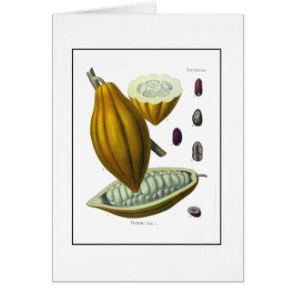 Cocoa bean vintage illustration card