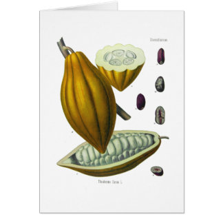 Cocoa bean vintage illustration card