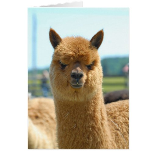 Cocoa Brown Greeting Cards