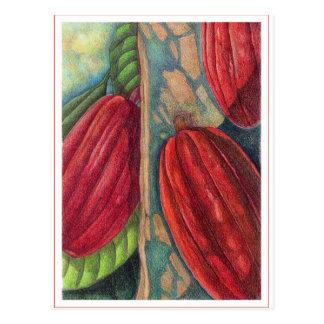 Cocoa Pods Postcard
