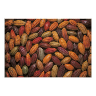 Cocoa pods posters
