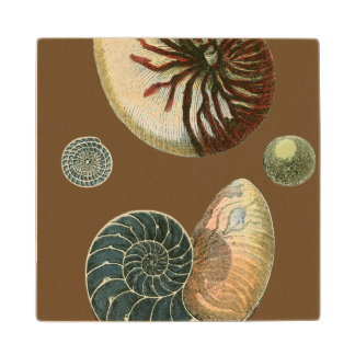 Cocoa Shell Wood Coaster