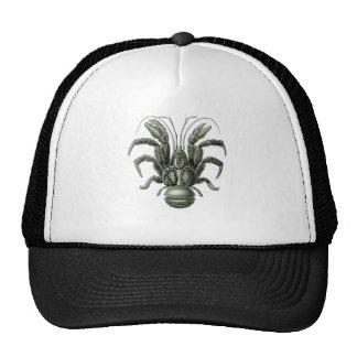 Coconut Crab Cap