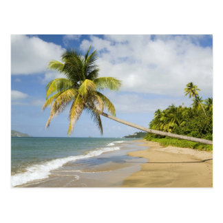 Coconut Grove Beach at Cades Bay, with St. 2 Postcard