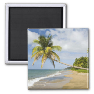 Coconut Grove Beach at Cades Bay, with St. 2 Square Magnet