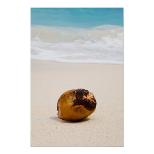 Coconut on a tropical beach poster