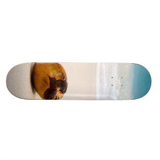Coconut on a tropical beach skate board