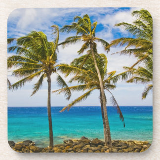 Coconut palm trees (Cocos nucifera) swaying in Coaster