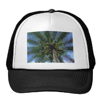 Coconut Palm Trucker Hat