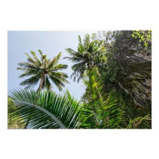 Coconut palms art photo