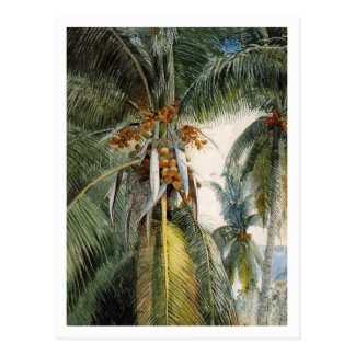 Coconut Palms, Key West by Winslow Homer Postcard