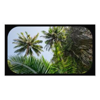 Coconut palms photograph