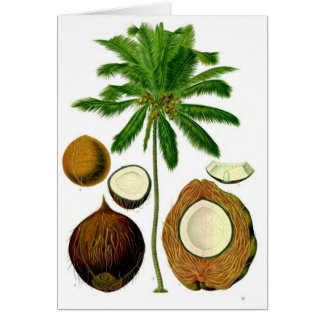 Coconut Tree Botanical Illustration Card