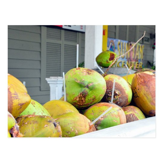 Coconut Water Key West FL Coconuts Postcard