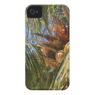 Coconuts & Tropical Palm Trees - Blackberry case