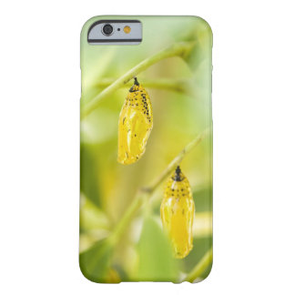 Cocoon of Paper Kite Butterfly, Okinawa Barely There iPhone 6 Case