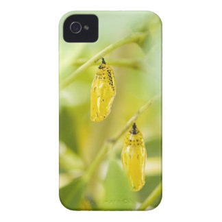 Cocoon of Paper Kite Butterfly, Okinawa iPhone 4 Case-Mate Cases