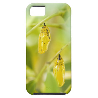 Cocoon of Paper Kite Butterfly, Okinawa iPhone 5 Case