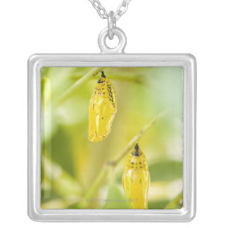 Cocoon of Paper Kite Butterfly, Okinawa Silver Plated Necklace