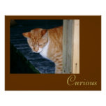 Cody the Cat  Curious Poster