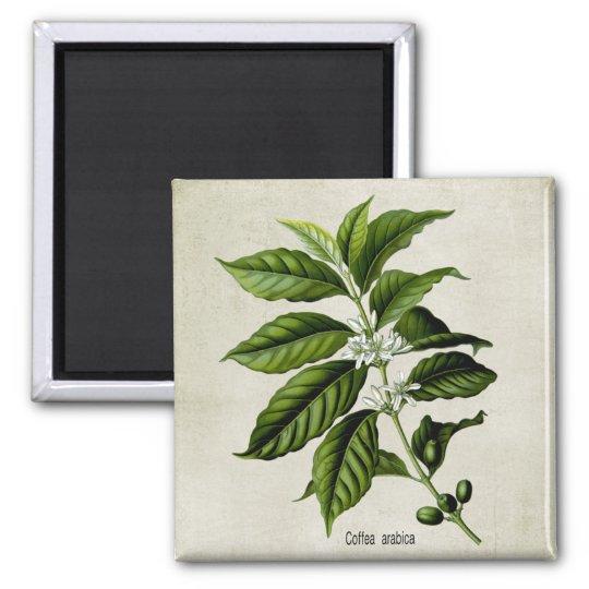 Coffea Arabica Square Magnet