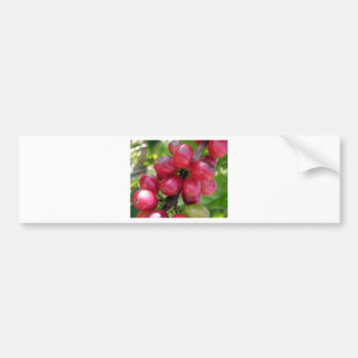 Coffee Cherries Bumper Stickers
