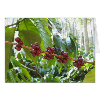 Coffee Cherry Clusters Card