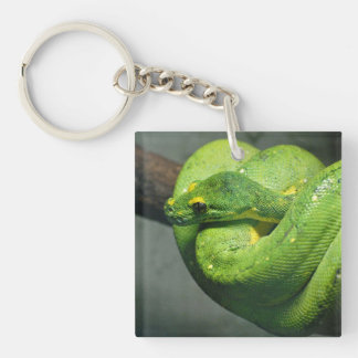 Coiled Green Tree Snake Key Ring