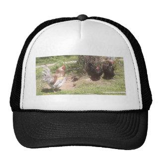 cok talk cap