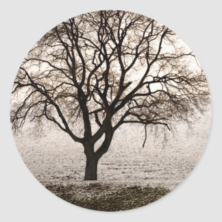 cold and lovely classic round sticker