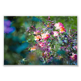 Cold Flowers Photo Print
